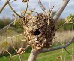 Wholesale bird nest buyer: Bird Nest
