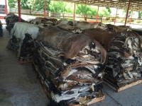 Sell Wet/Dry Salted Donkey Hides/ Cow Hides/sheep /Goat Skin