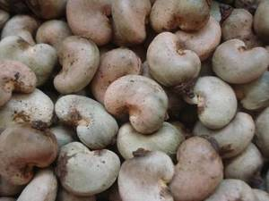 Wholesale raw cashew nut: Raw Cashew Nuts Grade W180