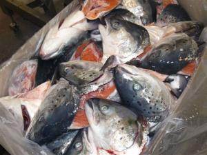 Wholesale tuna: Frozen Salmon, Pollock and Tuna