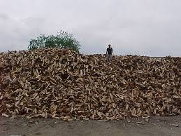 Wholesale birch firewood for sale: Kiln Dried Firewood for Sale, Oak and Beech Firewood Logs