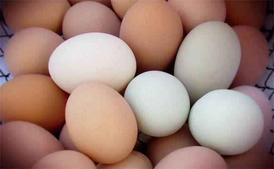 Sell Fresh Chicken Eggs White and Brown