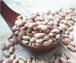 Wholesale lights: Light Speckled Kidney Beans for Sale