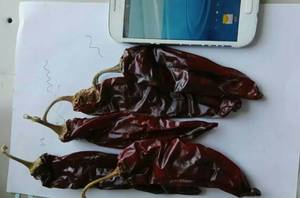 Wholesale chili red: New Crop Drying Sweet Red Chili Paprika Peppers
