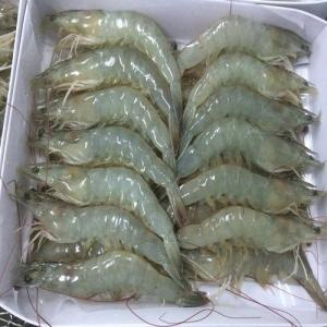 Wholesale crab: Shrimps , Crabs, Lobster