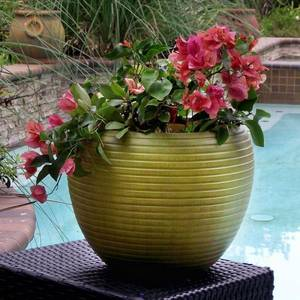 Wholesale fiberglass planter: Fibreglass Planters
