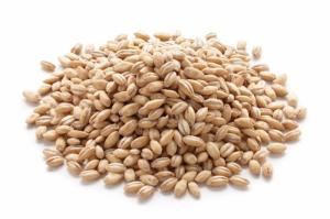 Wholesale sesame seed: Sesame Seeds