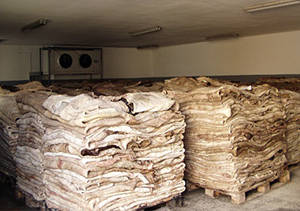 Wholesale animal skin: Donkey Hides and Animal Skins for Sale