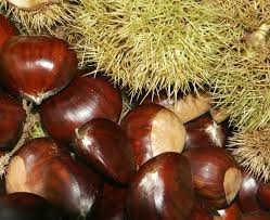 Wholesale Chestnuts: Chestnut