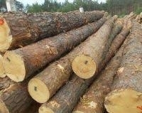 Wholesale ebony wood: Pine.Oak ,Beach Wood Logs