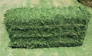 Wholesale alfalfa hay: Alfalfa Hay