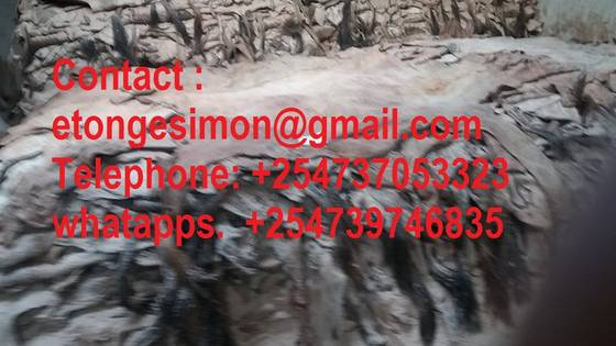 Sell Dry Donkey  hides , COW SKIN, SHEEP SKIN for sale