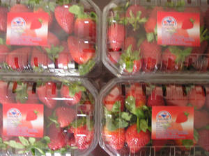 Wholesale Berries: Fresh Strawberry