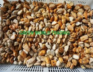 Wholesale oyster: Frozen Mussels , Clam , Oyster , Blue Mussel , Scallop , Shellfish