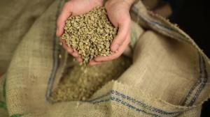 Wholesale coffee beans: Coffee Beans