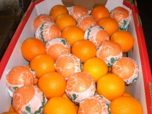 Wholesale Citrus Fruit: Fresh Navel Orange,Valencia Orange,Baladi Orange