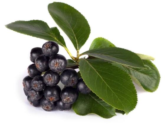 2019 Hot Saling 100 %Purest Aronia Extract 1% Anthocylin