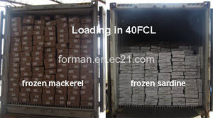 Wholesale frozen fish: Loading Frozen Fishes in 40FCL