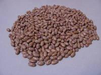 Sell Light Speckle Kidney Beans