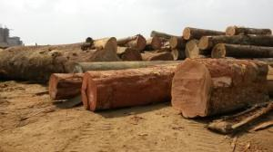 Wholesale iroko more: Doussie, Teak, Pachyloba Round Logs and Sawn Lumbers  for Sale Generalwoods.Servicesltd@gmail.Com