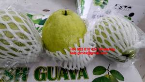 Wholesale red kiwi: Viet Nam Fresh Guava