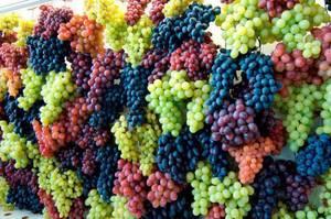 Wholesale organic: Best Quality Fresh Organic Grapes