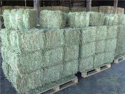 Sell Lucerne