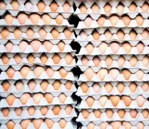 Wholesale eggs: Fresh Chicken Table Eggs/Fresh Chicken Hatching EGGS At Good Prices