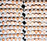 Fresh Chicken Table Eggs/Fresh Chicken Hatching EGGS At Good Prices