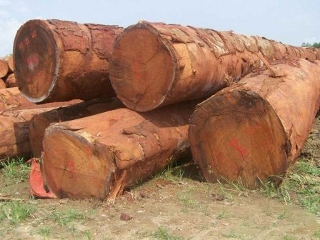 Sell Hard Wood Timber Logs and Sawn Wood