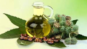 Wholesale castor oil: Castor Oil