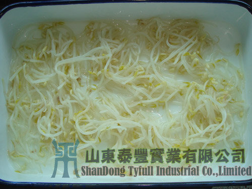 Canned Soybeans Sprouts