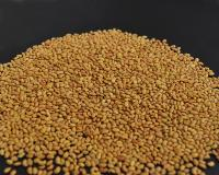 Sell best quality forage seeds for sale