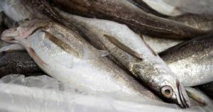 Wholesale frozen fish: Whole Frozen Hake Fish