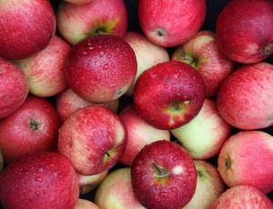 Wholesale Apples: Red Delicious Gala Apples