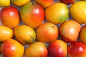 Wholesale Mango: Fresh Mango