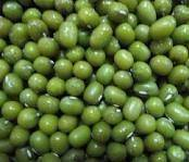 Wholesale lead ore price: Green Mung Beans