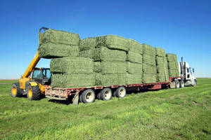 Wholesale mid: Best Quality Alfafa Hay,Timothy Hay, Alfafa in Bales