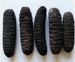 Wholesale Sea Cucumber: Premium Quality Dried Sea Cucumber
