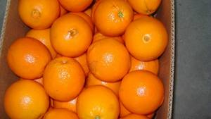Wholesale Citrus Fruit: Grade A+ Navel and Valencia Orange for Sale