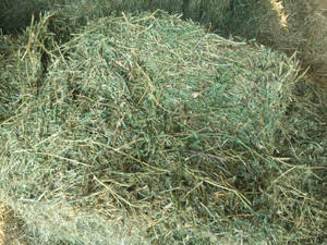 Wholesale Hay: Grade A Quality Alfalfa and Lucerne Hay for Sale