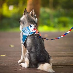 4abb430497b9 Guangzhou QQPETS New Product Custom Massage Dog Harness · Wholesale pet  collar ...