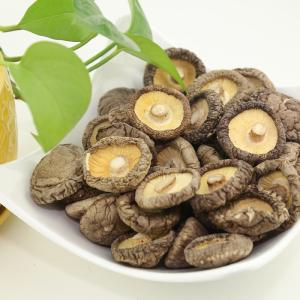 Wholesale shiitake: High Quality Spring Smooth Shiitake Mushroom