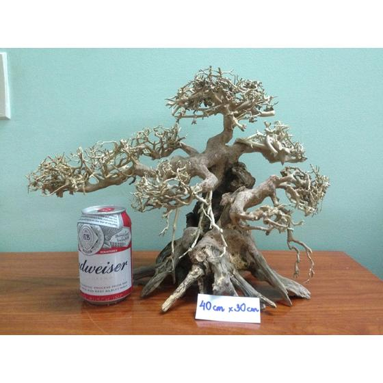 Sell Bonsai Driftwood For Home And Aquarium Decoration
