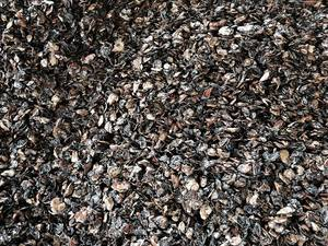 Wholesale ddp: Cashew Nut Shell Residue Ddp 84938595090