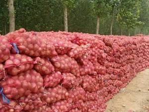 Wholesale mid: Fresh Red Onion