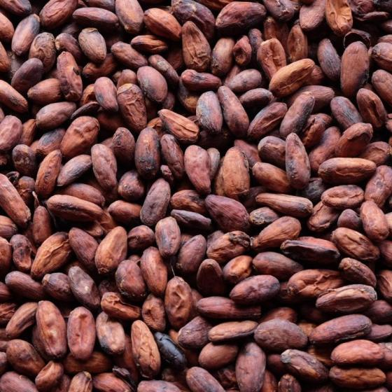 Cocoa Beans From Ivory Coast / Cocoa Beans for Sale