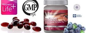 Wholesale pea protein: Protein Nutrishake