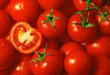 Wholesale Fresh Tomatoes: Fresh Tomatoes for Sale