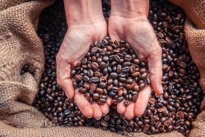 Wholesale Coffee Beans: Robusta and Arabica Coffee